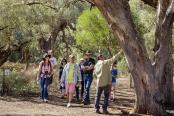 Wilpena Pound - Guided Walking Tour
